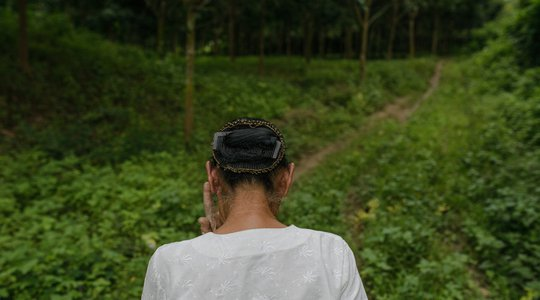 Woman walking through rubber plantation - Shan state, Myanmar. 06/11/2014