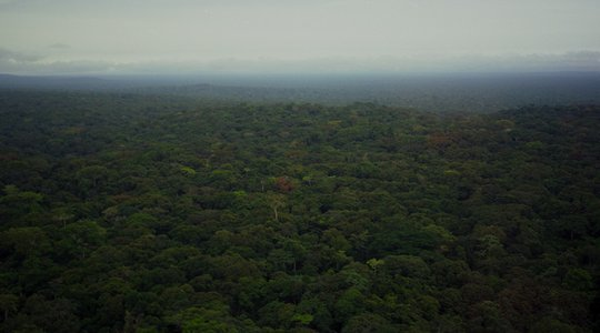DRC rainforest