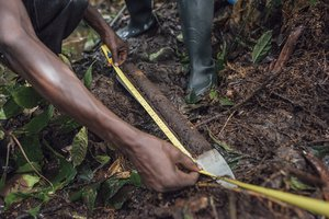 Scientists in Congo basin peatlands 2