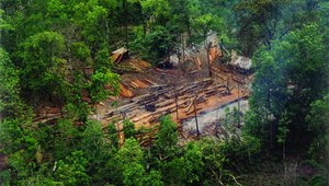 Logging Cambodia (photos from Taking a Cut report)