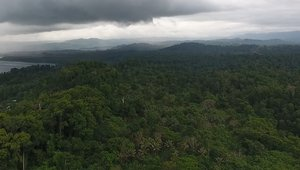 Drone footage shows rainforests in the Pomio District of East New Britain Province, Papua New Guinea slated to be cleared for oil palm.