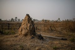 Charred termite mound in the remnants of homes burnt down by HAGL, Laos.