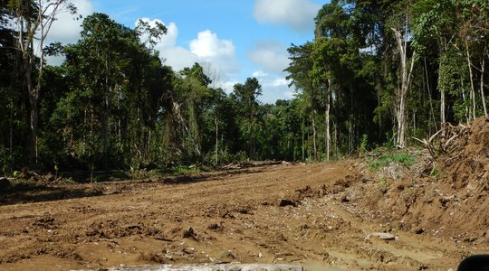 Logging in East Sepik Province, PNG