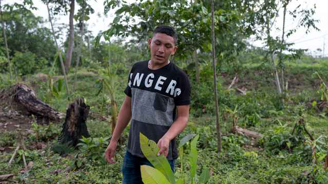 Ramon gives a tour of the land that his family owns, showing the diversity of flora that has been taken over by palm oil plantations.