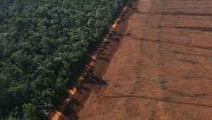 deforestation amazon