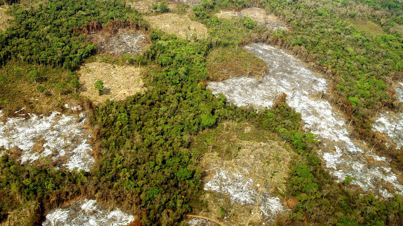 laos deforestation