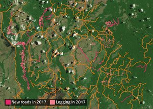 PNG logging roads map 2