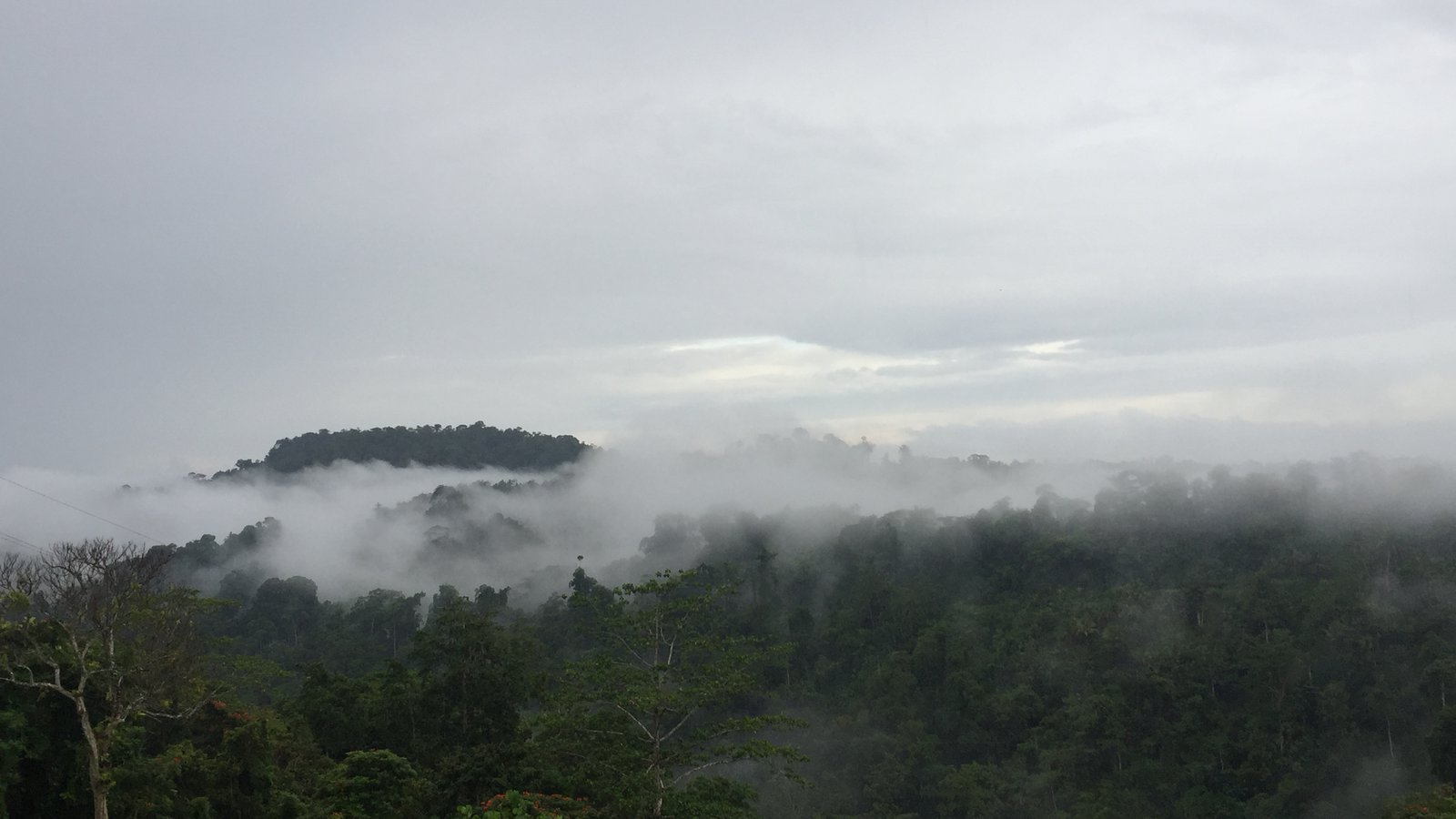 Turubu area forests, East Sepik Province, Papua New Guinea