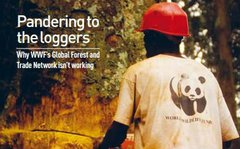 Pandering To The Loggers cover