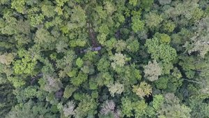 virgin forest in PNG